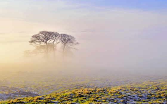 mist, поле, утро