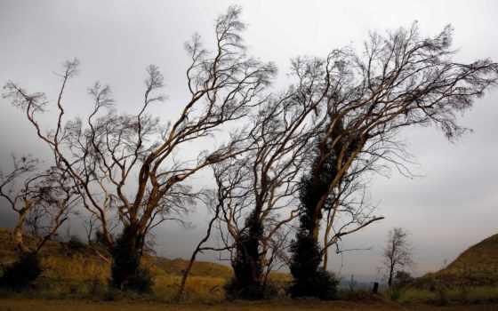 природа, summer, trees Фон № 133982 разрешение 1920x1080