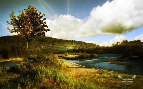 parede, papel, natureza, rio, pin, árvore, imagens,