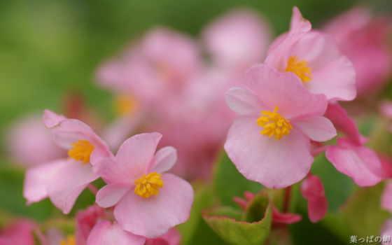 цветы, flowers, full, market, free,