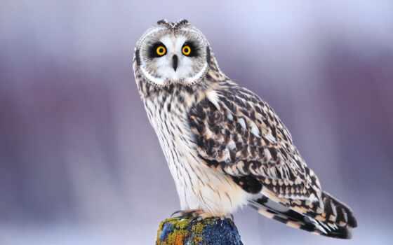 winter, сова, птица, взгляд, свет, zhivotnye, снег,
