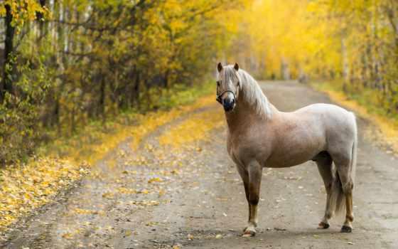 caballo, fondos, pantalla, otoño, gratis, escritorio, descargar, animalia, imagen,