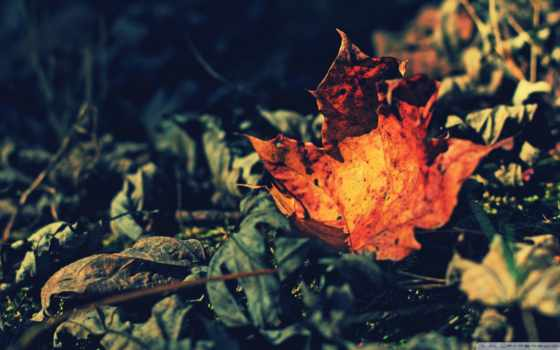 макро, лист, красивые