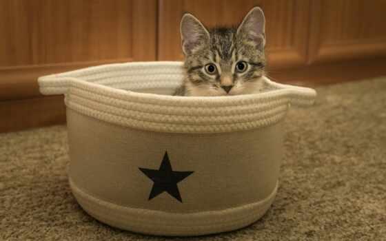 кот, котенок, animal, free, фото, страница