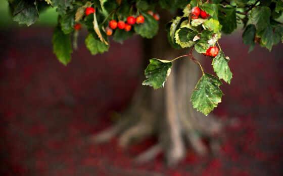 дерево, музыка