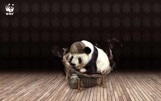 панда,