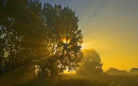 свет, sun, сквозь, дерево, листья, свой, легко, сможете, объектива, глазком,