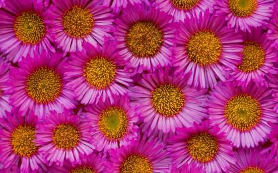 cvety