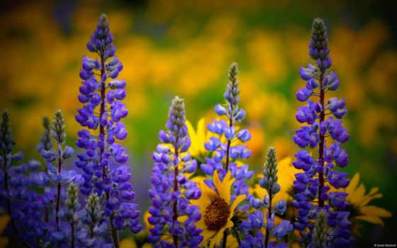 цветы, flowers, категория