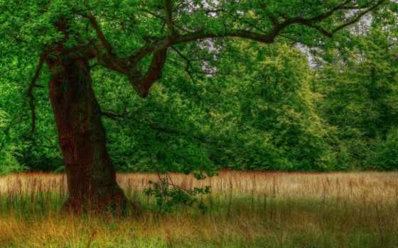 фотошопа, шаблон, ребенок, рамки, psd, шаблоны, мб, лес, клипарт, поляна, автор,
