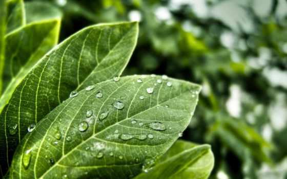 листва, роса, зеленые, капли, капельки, росы, листьях, лист, макро, каплями, трава,
