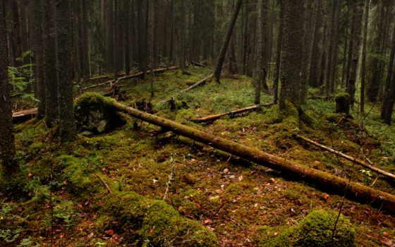 природа, лес, trees, поваленные, лесу, брёвна, positive, тематика, пост, чаща,