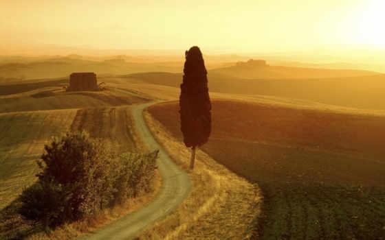 поле, закат, summer, cvety, оранжевый, вечер, дерево, landscape, дорога