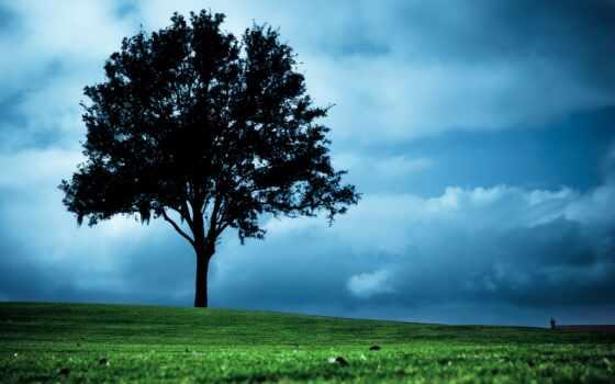 дерево, растение, much, небо