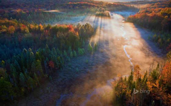 national, бобр, гора, лес, зелёный, луг, джордж, vermont,