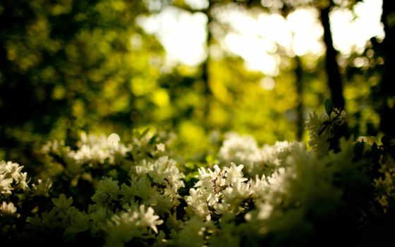 цветы, природа, макро