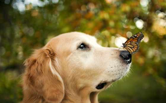 собака, собаки, природе