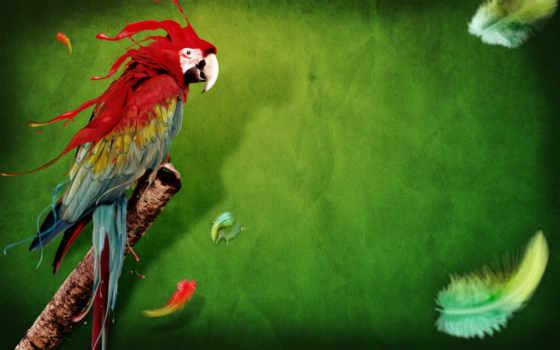 попугай, птица, ara