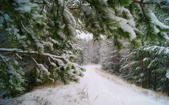 winter, зимушка, природа, зимние, заставки, click, года, one, pinterest,