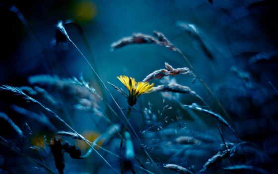 одуванчик, траве, высокой, луис, гонсалес, мариано, автор, разрешениях, разных, yellow, часть,
