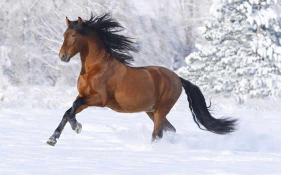 лошадь, браун, bay, масть