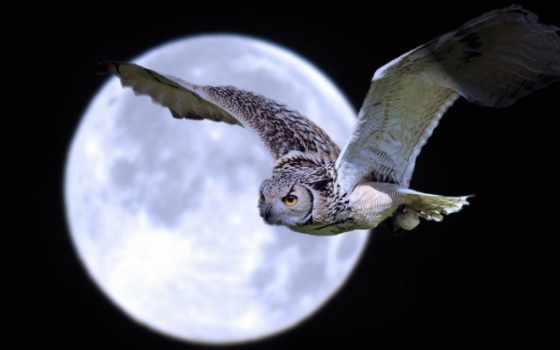 луна, сова, ночь