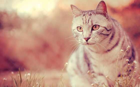 коты, часть, подборка, cats, кошками, котами, картинок, котятами,