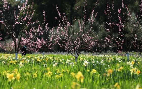 весна, музыка, природа