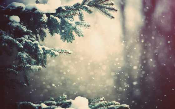 снег, winter, trees, лес, есть, hành, тег, всех, которых, lũng,