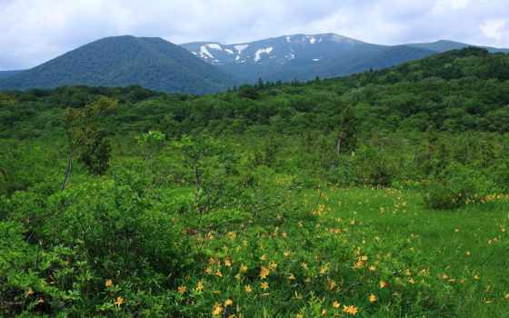 mountains, горы, кустики, trees, трава, flowers, небо, landscape, paisagem, browse, montanhas,
