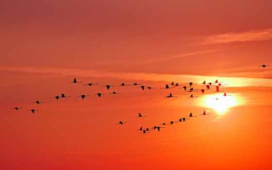 небо, broadband, sun, птицы, журавли, birds, тв, закат, clouds,