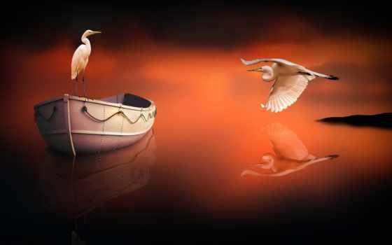desktop, birds, top, закат, попугай, art,