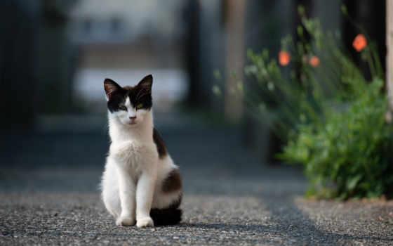 кот, детей, глазах, полиции, самарской, сотрудница, бросила, промышленными, сквозь, glass, играет,