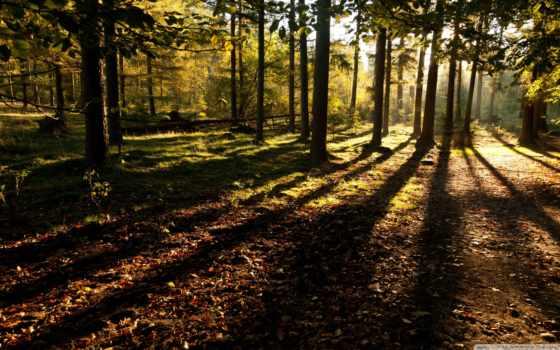 природа, лес, gifs, леса, gif, ja,