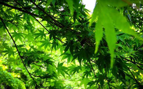 зеленые, листва, trees, pinterest, фотообои, фоны,