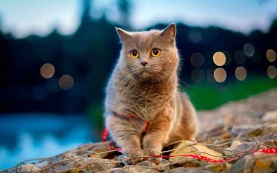 кот, animal, gatos