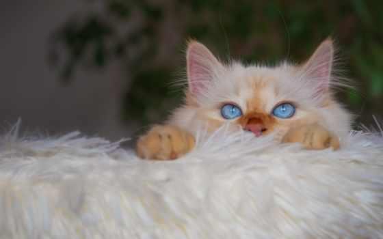 кот, взгляд, котенок, red, смотреть, растение, house, уют, white