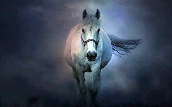 лошадь, white, color, popularity