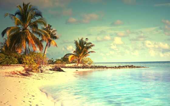 пляж, море, побережье, природа, ocean, небо, palm, summer, shutterstock, закат