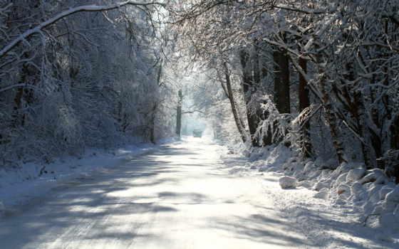 зима, деревья Фон № 8363 разрешение 1920x1200