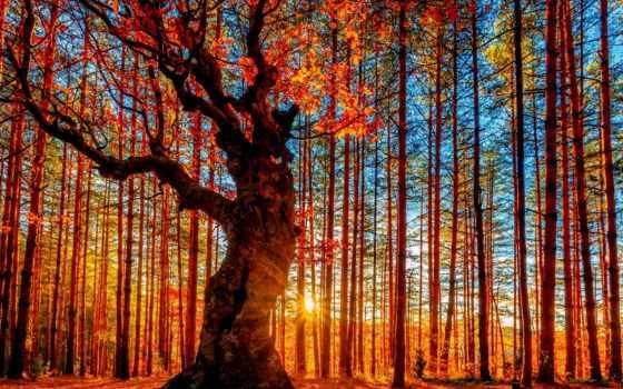 лес, осенний
