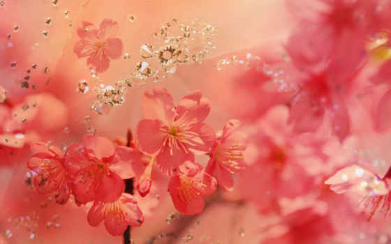 фон, flowers, red, цветы, you, awesome,