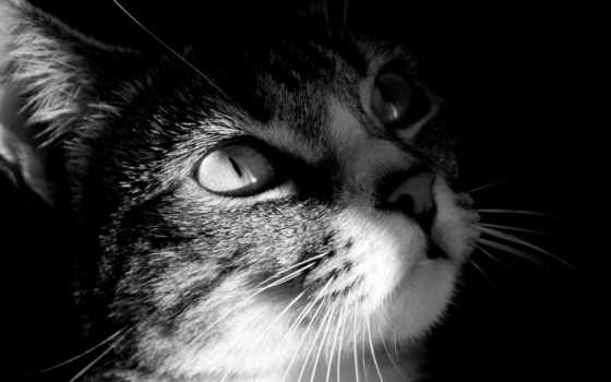 кошки, kartinka, zhivotnye