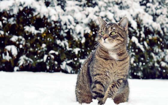 winter, кот, снег