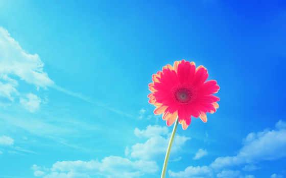 цветы, яркий, garden