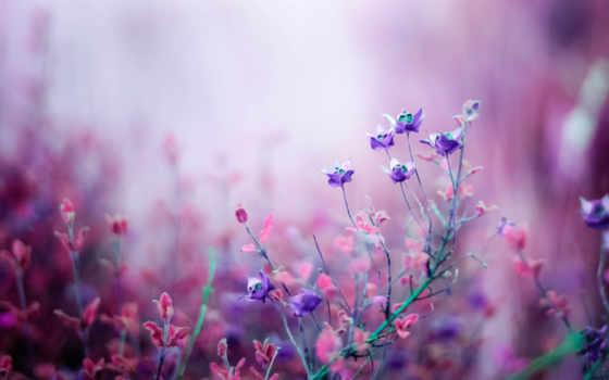 цветы, природа, часть, полевые, макро, сиреневые, purple, fone, размытом, боке, розовые,