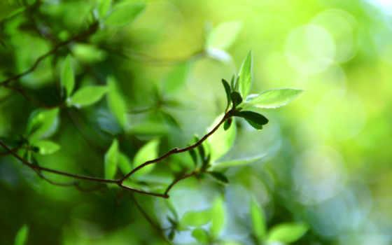 летние, зелёный, листики