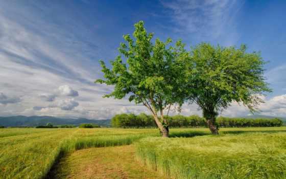 природа, весна, поле, небо, trees, телефон, margin, страница, установить, italian,