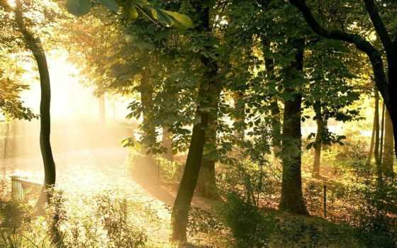 природа, desktop, ipad, мост, мини, осень, park, река, trees,