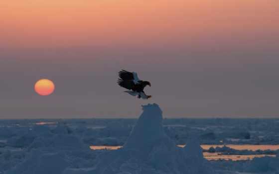 birds, птица, high, изображение, картинка, пингвин, definition, лысый,